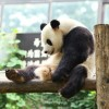 アクセス解析の画面で表示される「panda-world.ne.jp」とは何か?