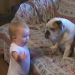 犬に説教する赤ちゃんがかわいすぎ!(動画あり)